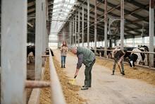 Busy Male Farm Owner Working W...