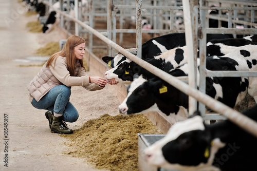 Leinwand Poster Attractive redhead woman crouching near cow and checking its mouth while taking