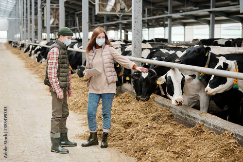 Experienced female farmer in mask holding tablet and pointing at cow while expla Fotobehang