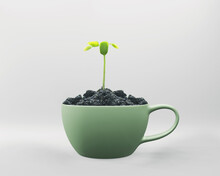 Young Plant Seed Growing Of Sp...