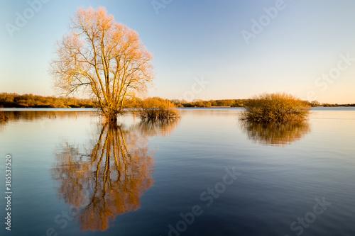 Fotomural L'heure dorée sur un lac en hiver avec le reflet des arbres et arbustes