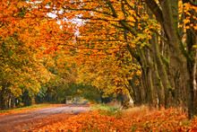 Country Road, Lane With Trees ...