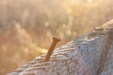 Old Rusty Curved Nail In Gray Board Against Golden Sunset Background