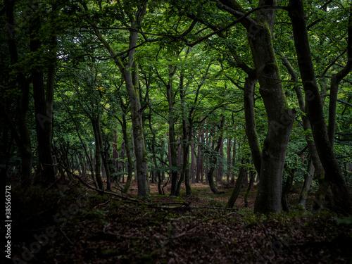 Obraz na plátně darss primeval forest