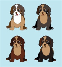 Cute Cavalier King Charles Spaniel Illustration. Tricolor, Blenheim, Black And Tan, Ruby Breed Puppies Colorful Vector