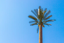 Base Radio Station Or Telecommunication Tower Disguised As A Palm Tree At Morocco. Equipment For Of Mobile Telephony, Wireless Computer Networking And Other Wireless Communications