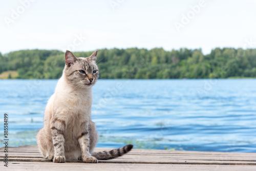 Grey cat sitting on wooden deck or pier, portrait of feline domestic animal looking aside Fototapet