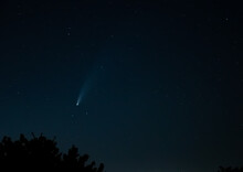 Comet Neowise Traveling Low Over Trees In Northwestern Sky