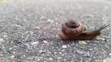 Snail On The Asphalt On A Blur...