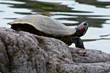 池際で頸御のばし、甲...