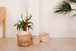 green plant in beige wicker basket and empty baskets in light empty exterior of the room. Stylish minimalistic Scandi interior. Growing and maintaining plants at home