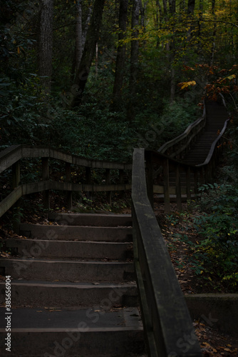 Fotografía A steep set of stairs lead up into a dark forest