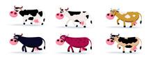 Six Different Colours Cows Car...
