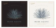 Vintage Agave Azul Detailed Engraved Style Illustration. Blue Agave Sketch