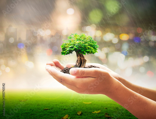 World environment day concept: Human hand holding big tree over blurred city nig Fototapet