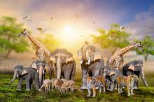 Large Group Of African Safari ...