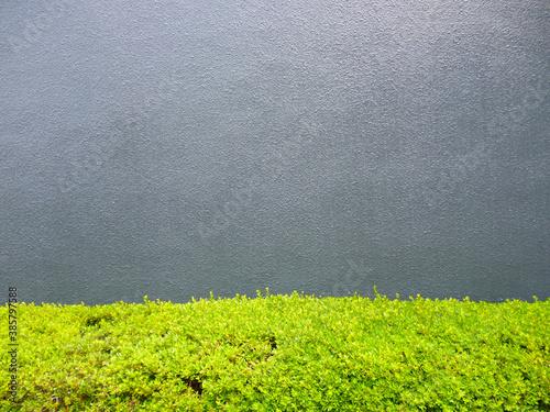 Fotomural 低木の植物とコンクリートの壁