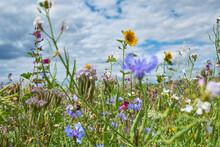 Wildflowers Blooming In Spring...