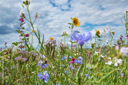 Wildflowers blooming in springtime meadow - 385803380