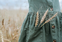 Girl With Wheat Ears In Pocket...