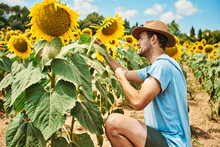 Man Crouching And Admiring Sunflower In Field During Summer