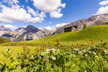 Swiss Alps In Summer With Secl...