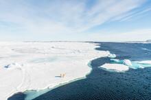 Polar Bear Standing On Pack Ic...