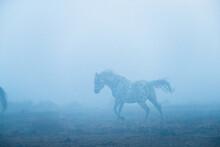 Appaloosa Horse Running On Lan...