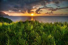 Scenic View Of Fern Plants Gro...