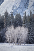 Scenic View Of Snowy Trees And Cliffs In Yosemite Valley
