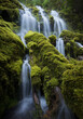 Scenic view of Proxy Falls cascading over moss covered rocks and logs in forest