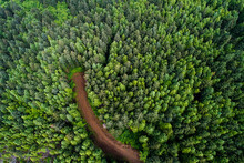 Aerial View Of Dirt Road In Fo...