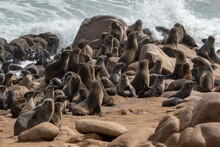 Colony Of Seal On Beach In Ske...