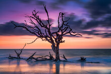 View Of Bare Tree On Driftwood...