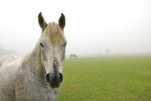 Portrait Of Horse Standing On ...