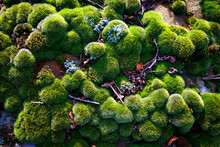 Close Up Of Moss On Rocks