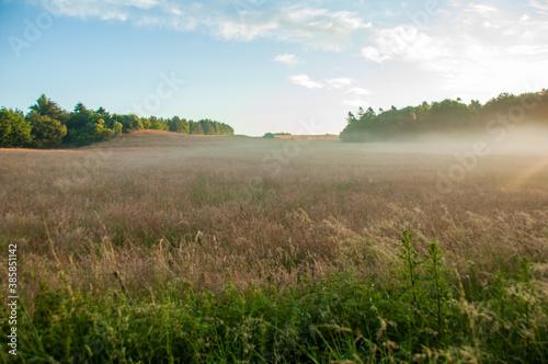 Carta da parati Danish cornfield mist at sunrise