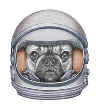 Astronaut. Portrait Of French Bulldog In A Space Helmet. Hand-drawn Illustration