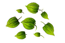 Unripe Green Physalis Fruit On...