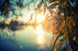 Leinwandbild Motiv Blurred abstract image, background and texture. Beautiful summer background, forest at sunset