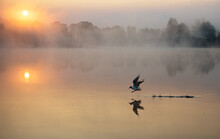 Foggy Sunrise Over The River W...