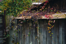 Old Wooden House In Autumn Wit...