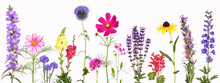 Selection Of Various Colorful Garden Flowers, Isolated