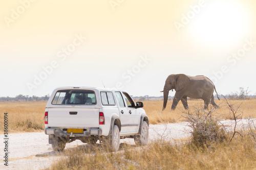 Auf Safari in Namibia