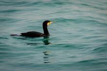 Un Cormorano Nella Laguna Di Venezia