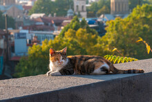 Cat On The Border Against The ...