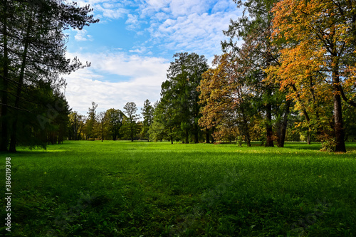 Fototapety, obrazy: Majestic particolored forest with sunny beams. Natural park. Dramatic unusual scene. Red and yellow autumn leaves. Beauty world.