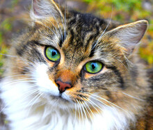Green Eyed Cat In Park
