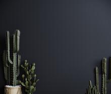 Cactus Plant Dark Background, Trendy Gray Minimal Background With Cactus Plant. 3d Rendering