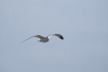 Birds In Flight Against A Gray Sky